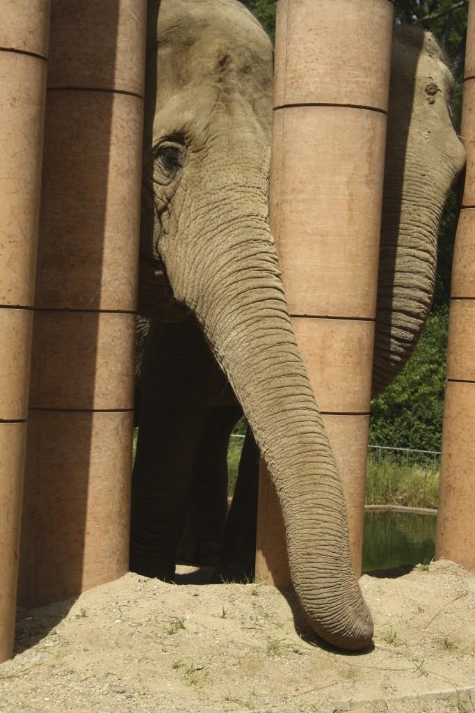 Elefanter i Zoo Magne 1 år