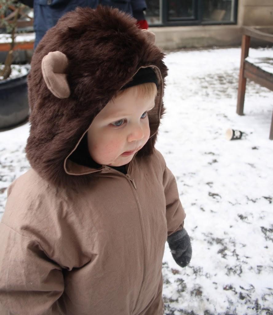 Lille løve