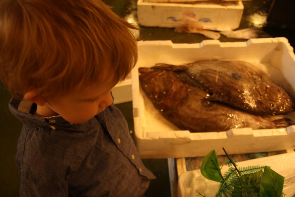 Magne kigger på fisk